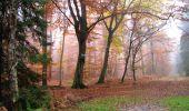 Randonnée A pied VILLERS-COTTERETS - le GR11A  dans la Forêt de Retz  - Photo 123