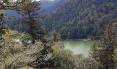 Trail Walk METZERAL - Steinabruck - Le Hohneck et ses 3 lacs Fischboedle, Altenweiher et Schiessrothried - Photo 25