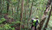 Trail Walk RIVIERE-SALEE - JOUBADIÈRE - MORNE CONSTANT - PAGERIE - Photo 19