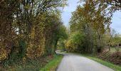 Randonnée Marche Durbuy - Boucle Barvaux Wéris Barvaux  - Photo 8