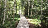 Trail Walk LA BRESSE - Lac de Lispach - Photo 2
