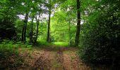 Randonnée Marche COYOLLES - en forêt de Retz_78_les rayons du Rond Capitaine - Photo 142