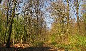 Randonnée A pied VILLERS-COTTERETS - le GR11A  dans la Forêt de Retz  - Photo 114