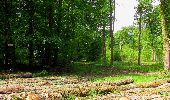 Randonnée Marche COYOLLES - en forêt de Retz_78_les rayons du Rond Capitaine - Photo 32