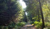 Randonnée Marche Saint-Hubert - Mirwart redu  - Photo 7