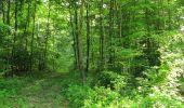 Randonnée Marche COYOLLES - en forêt de Retz_78_les rayons du Rond Capitaine - Photo 96