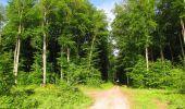 Randonnée Marche COYOLLES - en forêt de Retz_78_les rayons du Rond Capitaine - Photo 89