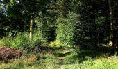 Trail Walk DAMPLEUX - en forêt de Retz_80_sur la Route Tortue et la Route Droite - Photo 113