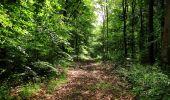 Randonnée Marche COYOLLES - en forêt de Retz_78_les rayons du Rond Capitaine - Photo 15