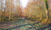 Trail Walk SAINT-JEAN-AUX-BOIS - en forêt de Compiègne_33_12_2019_les Tournantes de l'étang Saint-Jean et des Prés Saint-Jean - Photo 20
