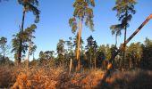 Trail Walk SAINT-JEAN-AUX-BOIS - en forêt de Compiègne_33_12_2019_les Tournantes de l'étang Saint-Jean et des Prés Saint-Jean - Photo 166