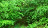 Randonnée Marche COYOLLES - en forêt de Retz_78_les rayons du Rond Capitaine - Photo 125