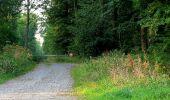 Trail Walk DAMPLEUX - en forêt de Retz_80_sur la Route Tortue et la Route Droite - Photo 4