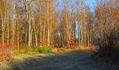 Trail Walk SAINT-JEAN-AUX-BOIS - en forêt de Compiègne_33_12_2019_les Tournantes de l'étang Saint-Jean et des Prés Saint-Jean - Photo 98