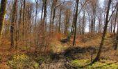 Randonnée A pied VILLERS-COTTERETS - le GR11A  dans la Forêt de Retz  - Photo 61