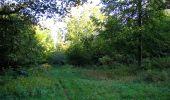 Trail Walk DAMPLEUX - en forêt de Retz_80_sur la Route Tortue et la Route Droite - Photo 66