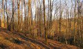 Trail Walk PIERREFONDS - en forêt de Compiègne_24_Tournantes sur le Voliard et sur la Fortelle_chaussée Brunehaut - Photo 96