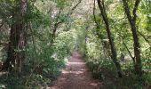 Randonnée Marche Tellin - repérage zero carbone 16092020 - Photo 21