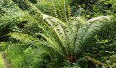 Randonnée Marche LOCMELAR - ballade 270719 - Photo 7
