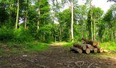 Trail Walk COYOLLES - en forêt de Retz_78_les rayons du Rond Capitaine - Photo 51