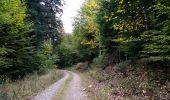 Randonnée Marche SENTHEIM - Bucherg - Photo 10