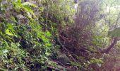 Trail Walk RIVIERE-SALEE - JOUBADIÈRE - MORNE CONSTANT - PAGERIE - Photo 25