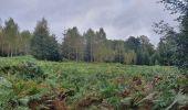 Trail Walk Sainte-Ode - rando lavacherie 6/10/2020 - Photo 5