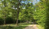 Randonnée Marche Rochefort - Croix du chariot vers Chapelle reine Astrid  - Photo 9