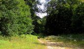 Randonnée Marche SAINT-JEAN-AUX-BOIS - en forêt de Compiègne_2_ruines gallo-romaines de Champlieu_les Petits Monts - Photo 132