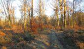 Trail Walk SAINT-JEAN-AUX-BOIS - en forêt de Compiègne_33_12_2019_les Tournantes de l'étang Saint-Jean et des Prés Saint-Jean - Photo 184