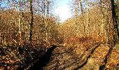 Trail Walk PIERREFONDS - en forêt de Compiègne_24_Tournantes sur le Voliard et sur la Fortelle_chaussée Brunehaut - Photo 52