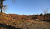 Trail Walk RETHEUIL - en forêt de Retz_76_dans les forêts de Retz et de Compiègne - Photo 33