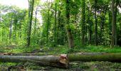 Randonnée Marche COYOLLES - en forêt de Retz_78_les rayons du Rond Capitaine - Photo 52
