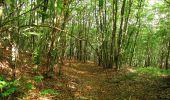 Randonnée Marche SAINT-JEAN-AUX-BOIS - en forêt de Compiègne_6_les Grands Monts_la route tournante sur la tête St-Jean - Photo 147
