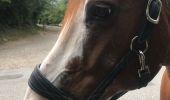 Randonnée Randonnée équestre ALBIGNY-SUR-SAONE - Rando avec Prince à pied 16 juillet 3 h 30 - Photo 1