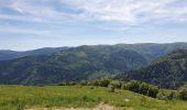 Trail Walk STOSSWIHR - hoeneck - Photo 1