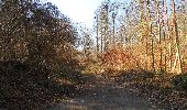 Trail Walk PIERREFONDS - en forêt de Compiègne_24_Tournantes sur le Voliard et sur la Fortelle_chaussée Brunehaut - Photo 150