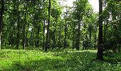 Randonnée Marche COYOLLES - en forêt de Retz_78_les rayons du Rond Capitaine - Photo 22