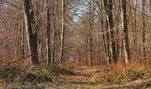 Trail Walk PIERREFONDS - en forêt de Compiègne_24_Tournantes sur le Voliard et sur la Fortelle_chaussée Brunehaut - Photo 127