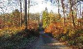 Trail Walk SAINT-JEAN-AUX-BOIS - en forêt de Compiègne_33_12_2019_les Tournantes de l'étang Saint-Jean et des Prés Saint-Jean - Photo 12