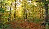 Randonnée Marche SAINT-JEAN-AUX-BOIS - en forêt de Compiègne_19_le Puits d'Antin_les Mares St-Louis_La Muette - Photo 98