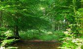 Randonnée Marche HARAMONT - en forêt de Retz_79_08_2019_vers Taillefontaine et Retheuil par les lisières - Photo 26