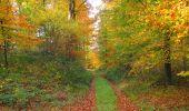 Randonnée Marche SAINT-JEAN-AUX-BOIS - en forêt de Compiègne_32_11_2019_les Tournantes de la Muette et sous la Tête Saint-Jean - Photo 117