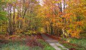 Randonnée Marche SAINT-JEAN-AUX-BOIS - en forêt de Compiègne_32_11_2019_les Tournantes de la Muette et sous la Tête Saint-Jean - Photo 134