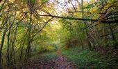 Randonnée Marche SAINT-JEAN-AUX-BOIS - en forêt de Compiègne_32_11_2019_les Tournantes de la Muette et sous la Tête Saint-Jean - Photo 167
