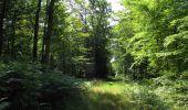 Randonnée Marche LACROIX-SAINT-OUEN - en forêt de Compiègne_35_la Croix Saint-Sauveur_le Ru du Goderu - Photo 102