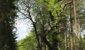 Randonnée Marche Rochefort - Croix du chariot vers Chapelle reine Astrid  - Photo 6