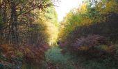 Randonnée Marche SAINT-JEAN-AUX-BOIS - en forêt de Compiègne_19_le Puits d'Antin_les Mares St-Louis_La Muette - Photo 87