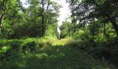 Randonnée Marche LACROIX-SAINT-OUEN - en forêt de Compiègne_35_la Croix Saint-Sauveur_le Ru du Goderu - Photo 11