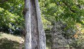 Randonnée Marche Yvoir - RB3 : GRP125 GR126 et GR129 - Photo 13